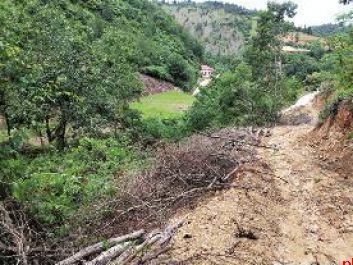 """洋县金水镇80亩山林被人""""剃光头"""" 木材贩子和林业站站长是""""铁哥们儿"""""""